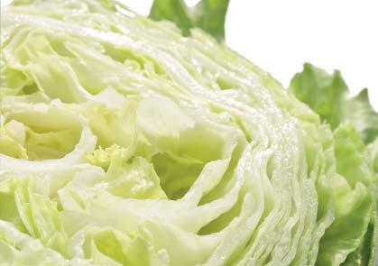 Салат кочанный хрустящий (айсберг)